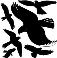 wetterfest Fensterwarnvögel AVERY Zweckform 4485