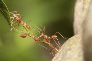 Insekten: 3D-Druck führt uns in eine geheimnisvolle Welt