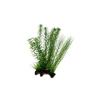 Dohse Flora Root