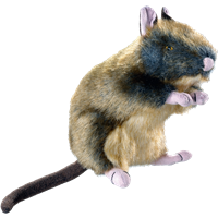 Hunter Wildlife - Ratte (44538)