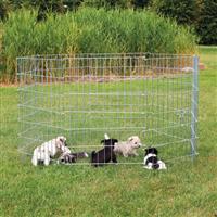 TRIXIE Freilauf für kleine Hunde